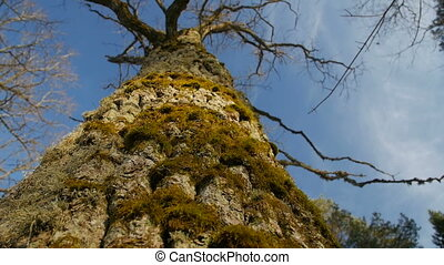 a Shallow Depth of Field Focused on the Moss on a Tree Trunk .