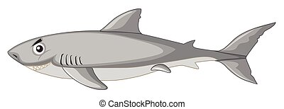 A shark on white background