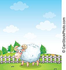 A sheep inside the fence