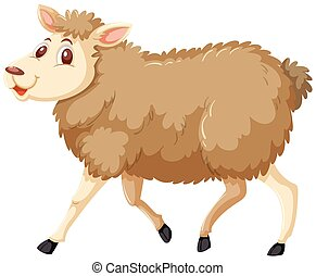 A sheep on white background