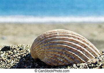 a shell on a beach