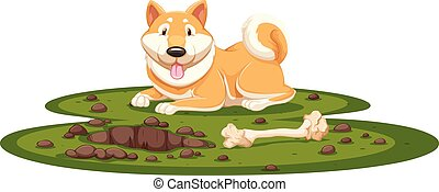 A Shiba Dog on White Background
