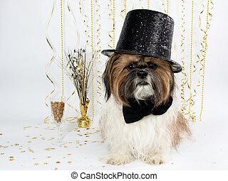 A Shih Tzu in a Top Hat Celebrates New Year's Eve