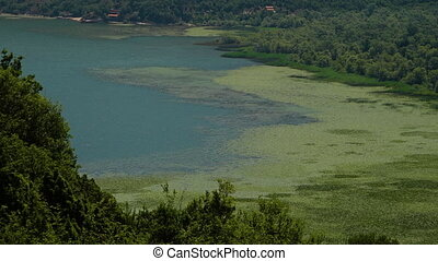 A shoreline with algae and reeds