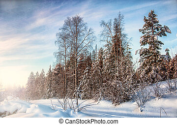 A short winter day in the north of Karelia. Russia