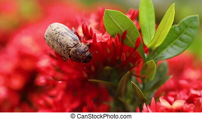 A shot of a beetle on a flower