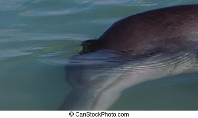A shot of a dolphin underwater