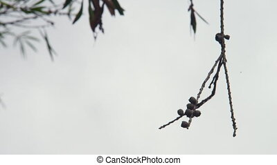 A shot of a withered branch - A medium shot of a withered...