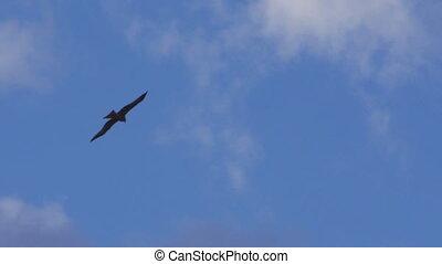 A shot of an eagle under a blue sky shot - A full shot of an...