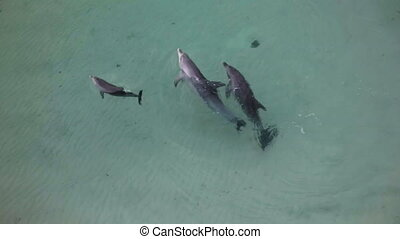 A shot of dolphins playing together