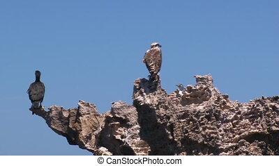 A shot of gulls on rocks - A medium shot of gulls on rocks....