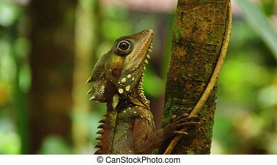 A shot of iguana on tree