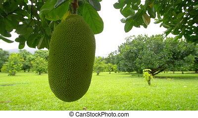 A shot of jackfruit