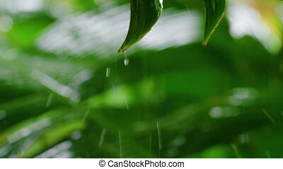 A shot of leaf with sprinkling water - A macro shot of a...