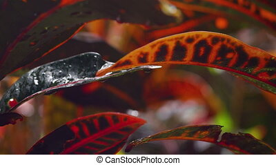 A shot of red leaves while raining