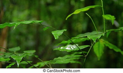 A shot of trees and leaves - A medium shot of leaves. ...