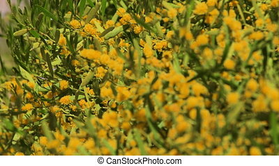 A shot of yellow flowers