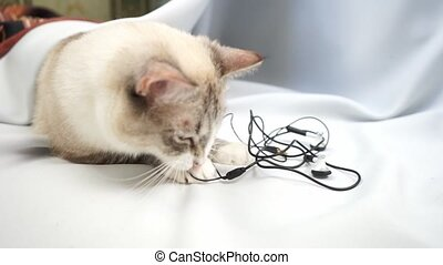 a siamese point lynx cat playing with wires of headphones ...