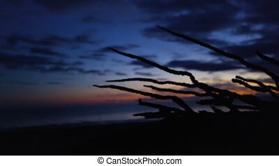 A silhouette of a root - A silhouette shot a root that pans...