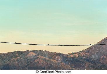 A silhouette of birds on wires near Kawah Ijen