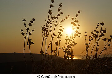 A silhouette of blades of grass, illuminated by the rays of the rising sun.