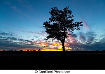 A silhouetted tree against a setting sun
