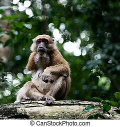 A single-arm monkey in nature, The strength of life concept