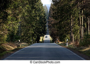 car on a forest road