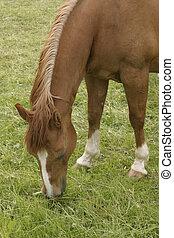 horse - a single horse on a belt