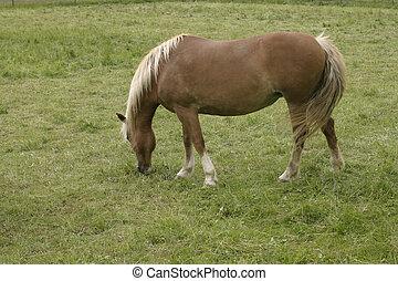 horse - a single horse
