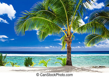 A single palm tree overlooking tropical beach on Roratonga, Cook Islands