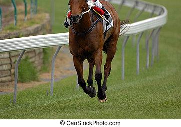 A single race horse on an empty track.