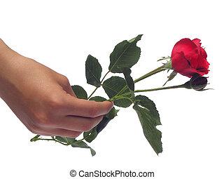 A single rose.