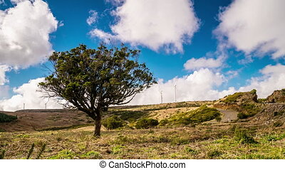 A single tree on flat plateau in Madeira island, Portugal