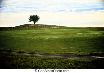A single tree stands alone on top of the hill.