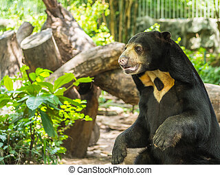 A sitting bear in the wild