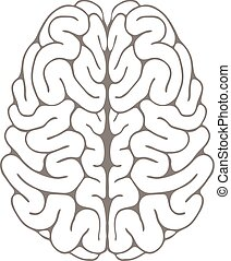 A sketch of the brain.