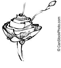 a sketch rose