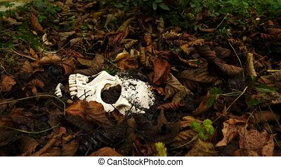 a skull in the ground amid the fallen foul foliage. 4k. copy space