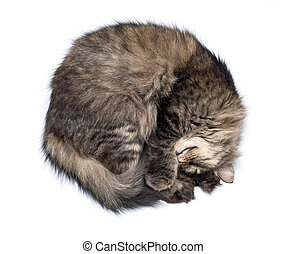 A Sleeping Cat Isolated on a White Background