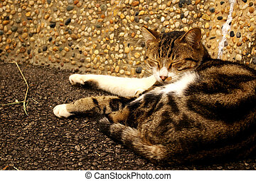 A sleeping cat on the ground