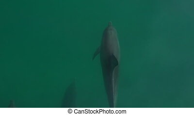 A slow motion shot of four dolphins