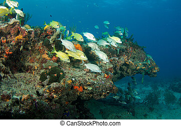 A small aggregation of fish on a reef ledge.