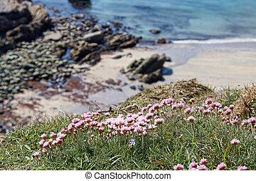 A small beach in Pembrokeshire