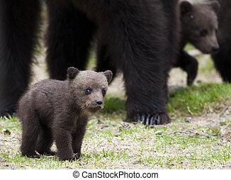 A small bear cub - The little bear cub with a lovely look.
