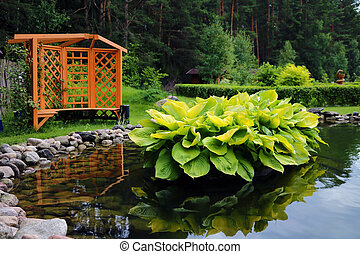 A small beautiful pond with green plants. Near the gazebo for a pleasant pastime.