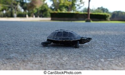 A small chaperah crawls along the asphalt road. concept of...