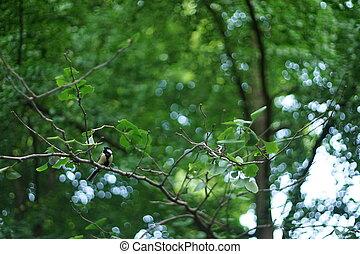 A small chickadee resting o a tree branch.