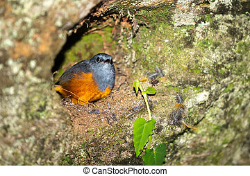 A small colorful native bird on a tree in Madagascar - One ...