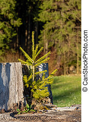 a small conifer on a tree trunk